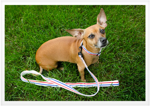 2013_July_dog-collar
