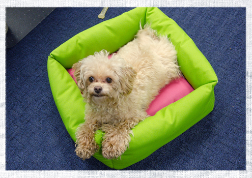 2014_March-Dog-Bed